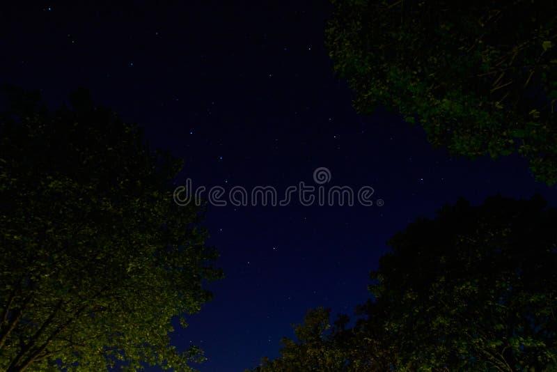 Le nightscape de grand ours image stock