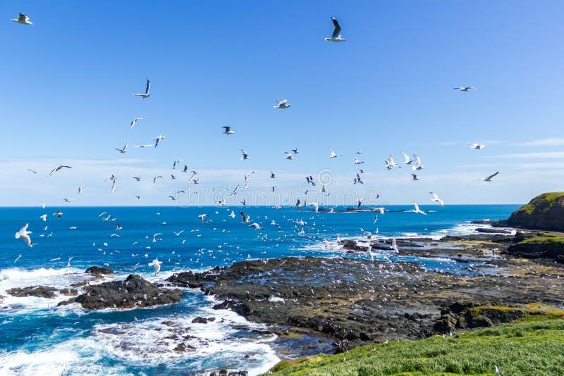 Le Nobbies en Phillip Island avec un temps propre et venteux et une mer très bleue image libre de droits