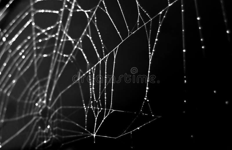le noir a isolé la toile d'araignée photos stock