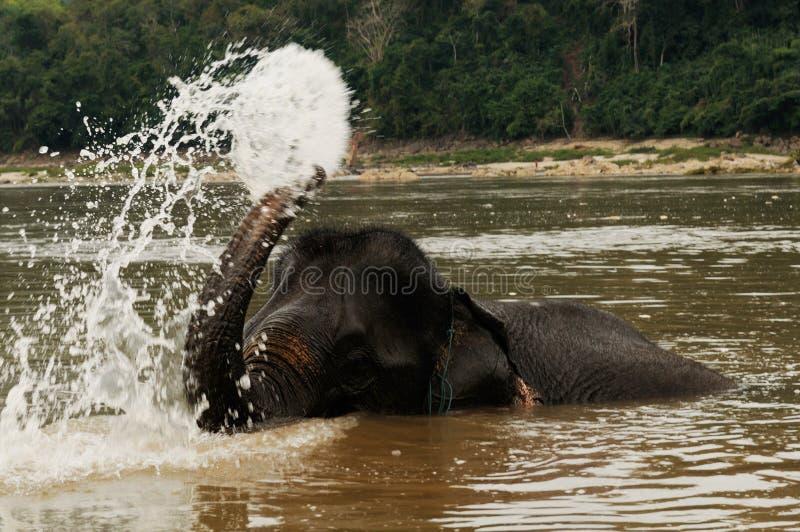 Le Nord-Laos : L'éléphant prend un bain à l'opposé du Mekong de images libres de droits