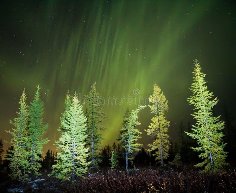 Le Norther s'allume (Aurora Borealis) image stock