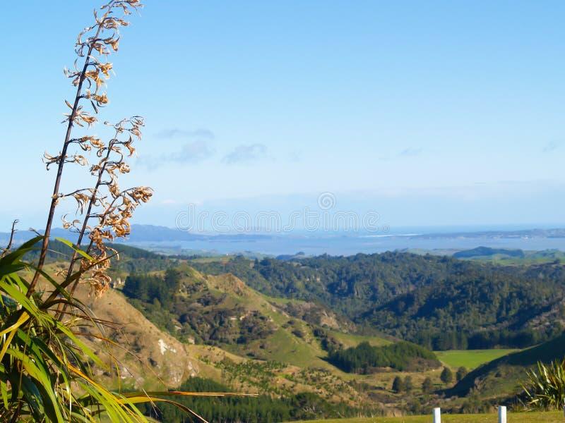 Le Nouvelle-Zélande typique roulant la campagne côtière image libre de droits
