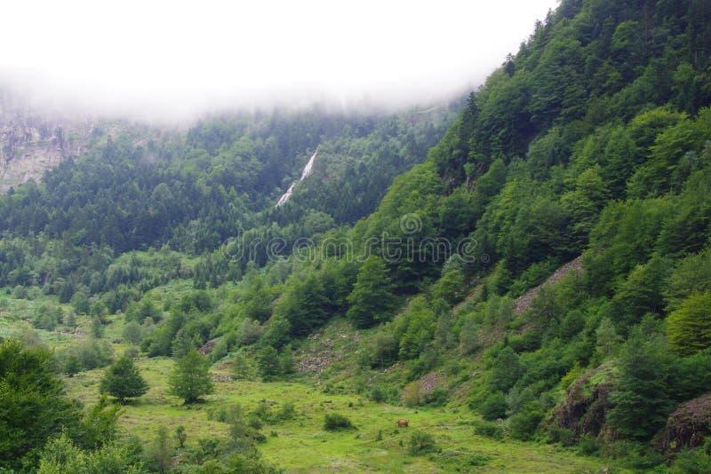 Le nuage brumeux devant la montagne verte, ciel est bleu-clair photo libre de droits