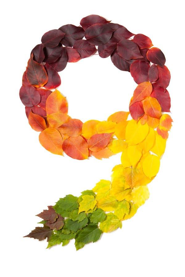 Le numéro neuf a fait avec des feuilles d'automne d'isolement sur le blanc photo stock