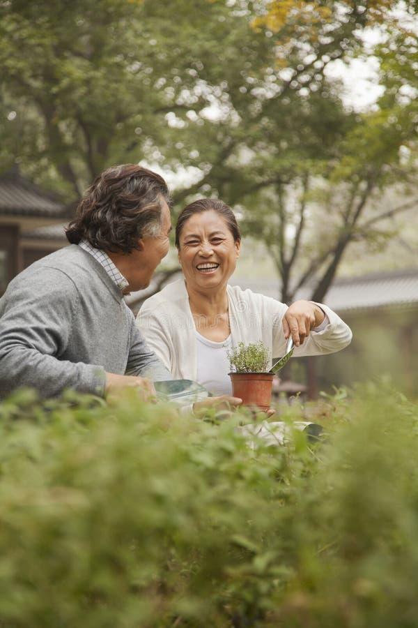 Le och skratta höga par i trädgård arkivbilder