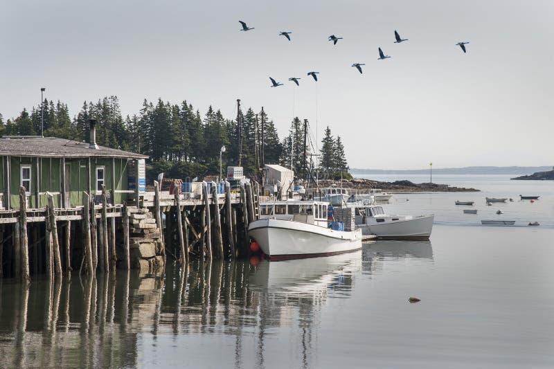 Segni della molla in gufi Maine capa immagine stock
