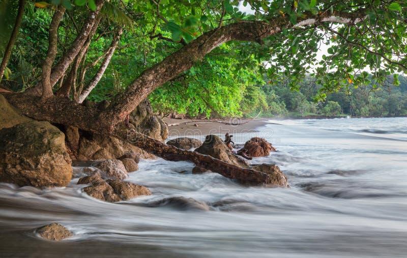 Le onde di oceano hanno colpito le rocce e gli alberi, Costa Rica fotografia stock libera da diritti