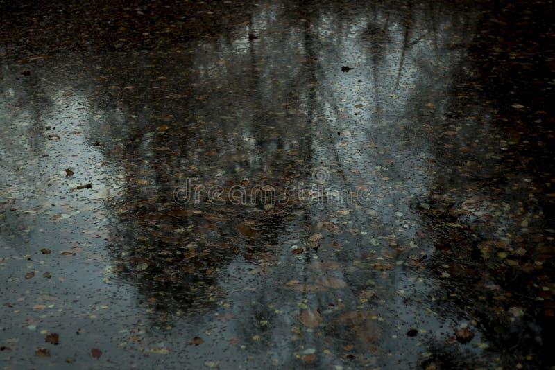 le ondulazioni della natura riflettono in autunno immagine stock