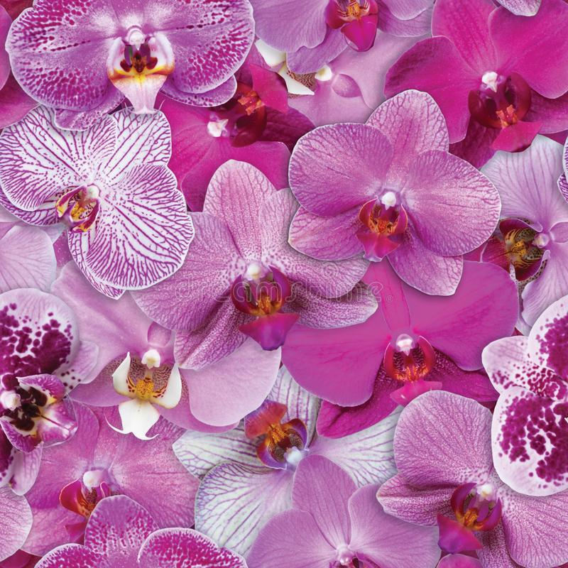 Le orchidee modellano il fondo senza cuciture del fiore fotografia stock