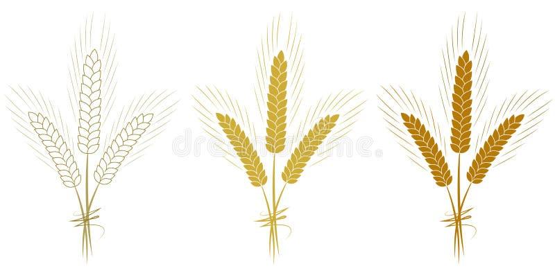 Le orecchie del grano hanno messo isolato sull'illustrazione bianca di vettore del fondo illustrazione vettoriale