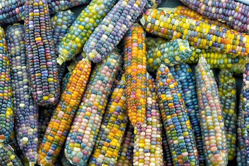 Le orecchie di vetro della gemma, arcobaleno hanno colorato il cereale immagine stock