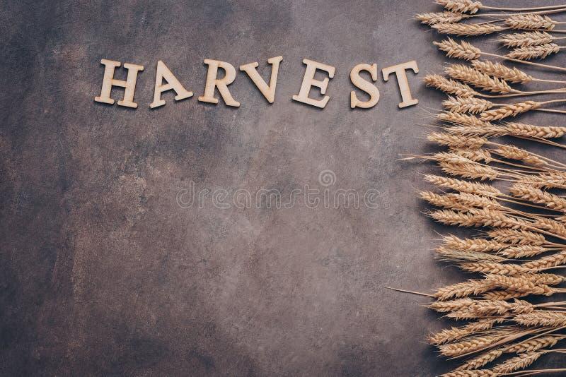 Le orecchie dorate di grano rasentano un fondo scuro Raccolto-parola delle lettere di legno Vista superiore, spazio della copia fotografia stock libera da diritti