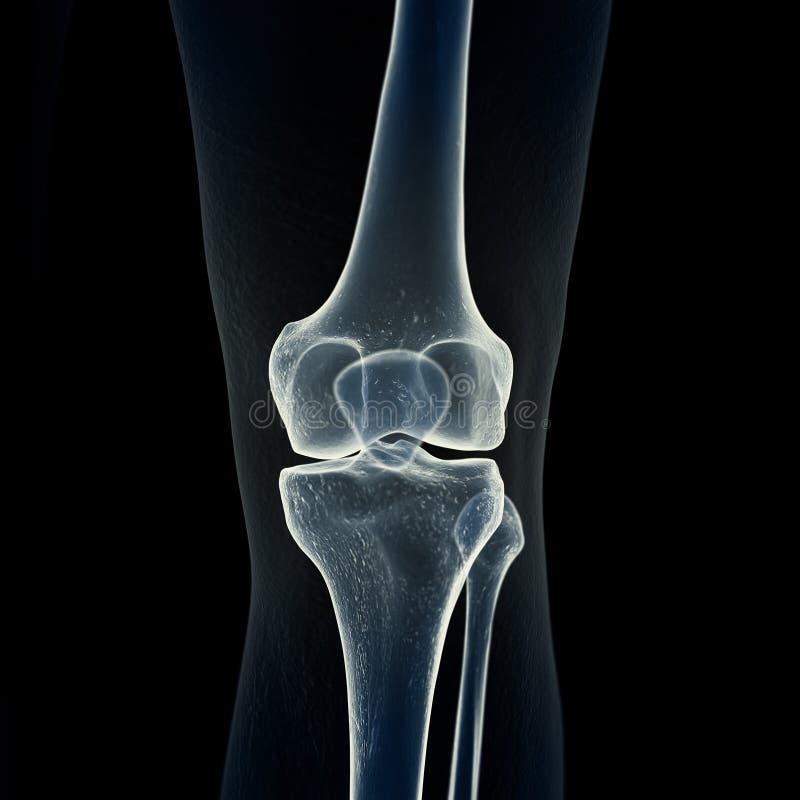 Le ossa del ginocchio illustrazione di stock