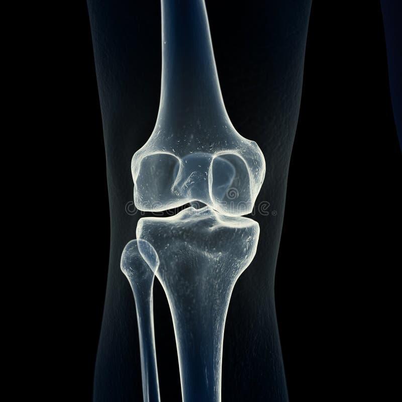 Le ossa del ginocchio illustrazione vettoriale