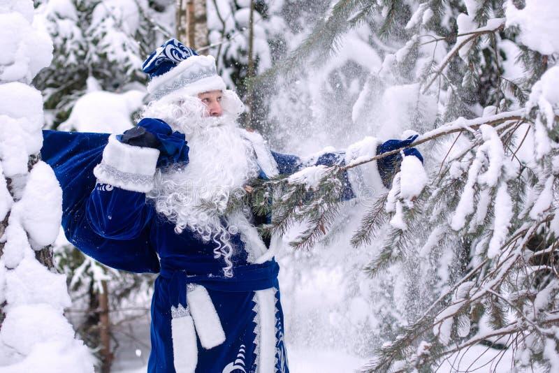 Le Père Frost avec un sac de cadeaux dans une forêt enneigée hiver, personnage russe de Noël Ded Moroz Le Père Frost secoue la ne photo libre de droits