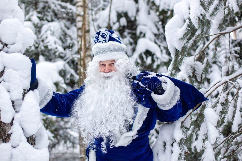 Le Père Frost avec un sac de cadeaux dans une forêt enneigée hiver, personnage russe de Noël Ded Moroz Le Père Frost secoue la ne photos libres de droits