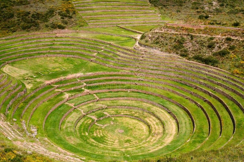 Le Pérou, laboratoire de l'agriculture des Inca photographie stock libre de droits