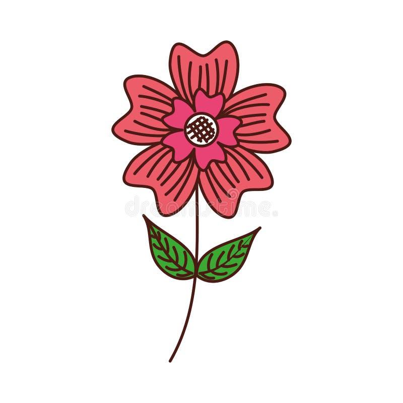Le pétale de fleur de bigorneau quitte l'usine de nature de tige illustration de vecteur