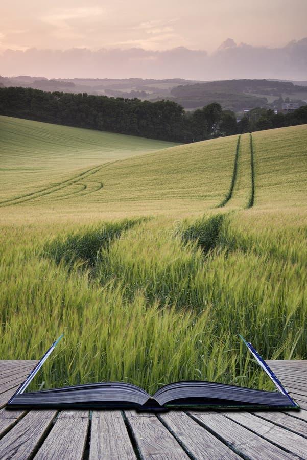 Le pagine creative di concetto dell'estate del libro abbelliscono l'immagine di grano f immagine stock