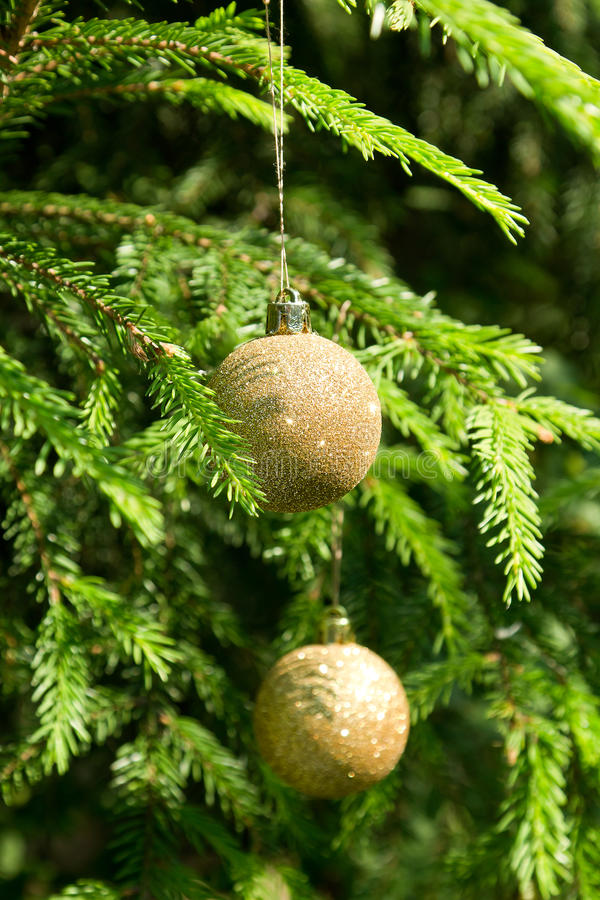 Le palle dorate dell'albero di Natale sull'albero di Natale verde si ramifica fotografia stock libera da diritti