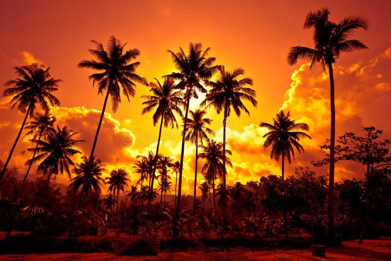 Le palme di noce di cocco sulla sabbia tirano nel tropico sul tramonto fotografie stock libere da diritti