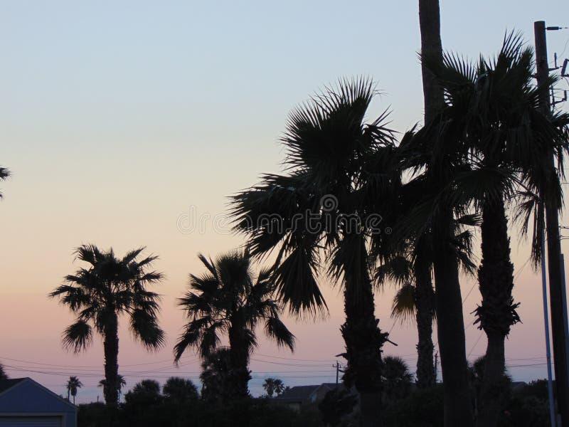 Le palme ed il cielo rosa sul Texas costeggiano a penombra fotografia stock libera da diritti