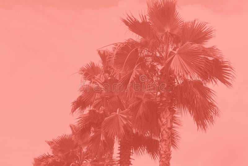 Le palme hanno tonificato immagini stock libere da diritti