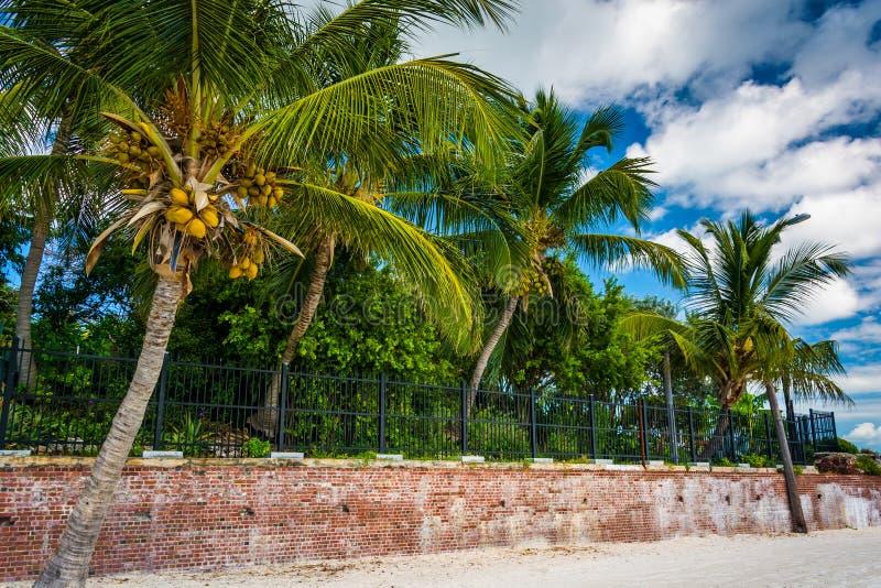 Le palme a Higgs tirano, Key West, Florida fotografia stock libera da diritti