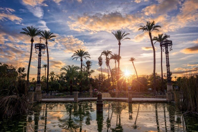 Le palme nel tramonto in Maria Luisa parcheggiano in Siviglia, Spagna immagine stock libera da diritti
