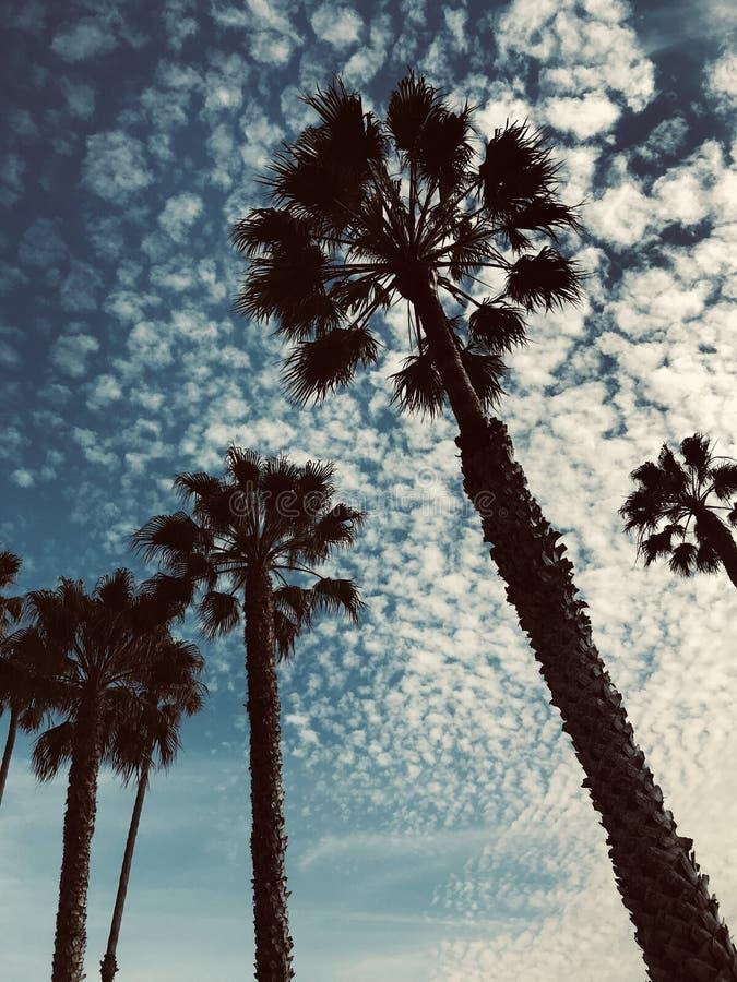 Le palme profilano al tramonto nella California del sud fotografia stock