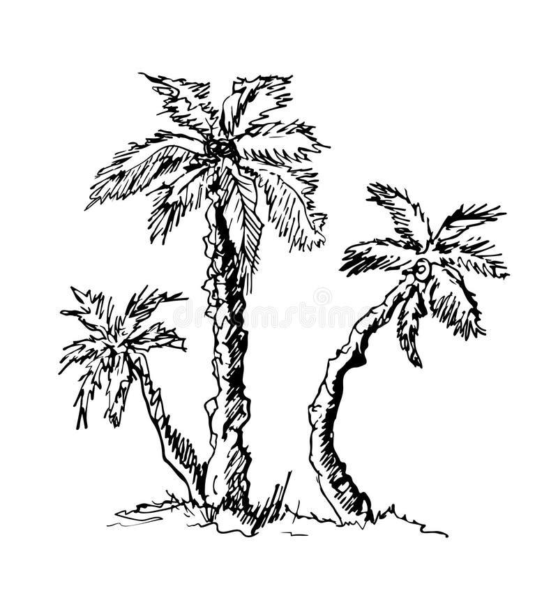 Le palme tropicali, siluette nere isoleited su fondo bianco Icona piana del cocco royalty illustrazione gratis