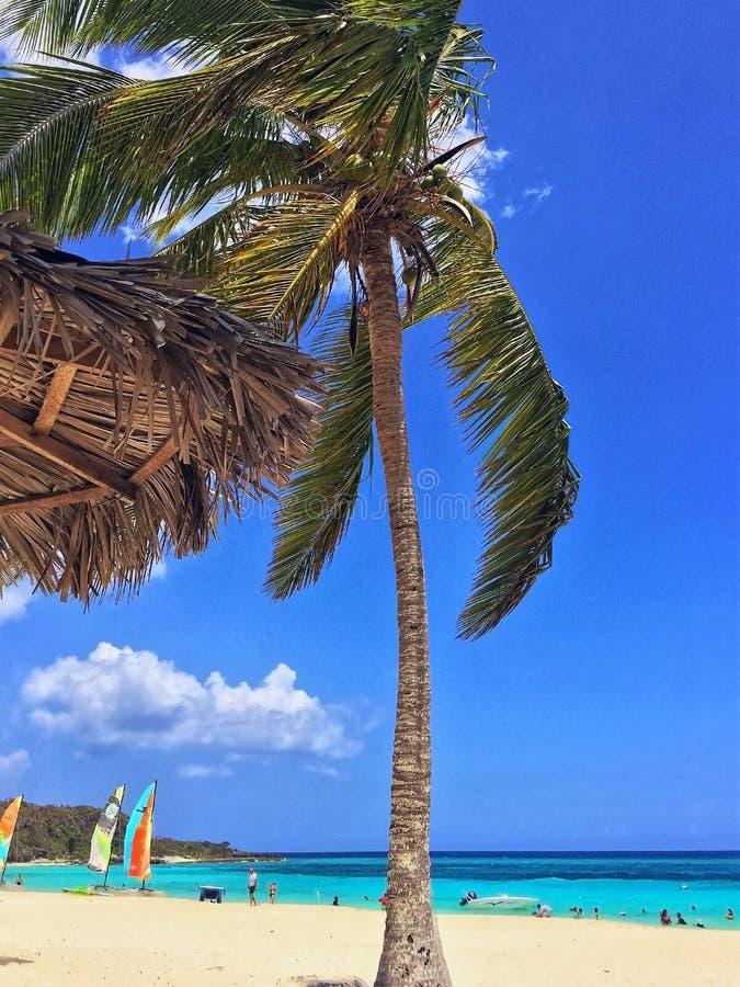 Le palmier et le palapa sur l'océan occupé échouent avec des bateaux images stock