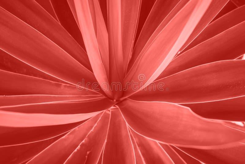 Le palmier laisse l'élevage dans la forme de fleur Beau modèle géométrique naturel Couleur de corail vivante à la mode vibrante photographie stock libre de droits