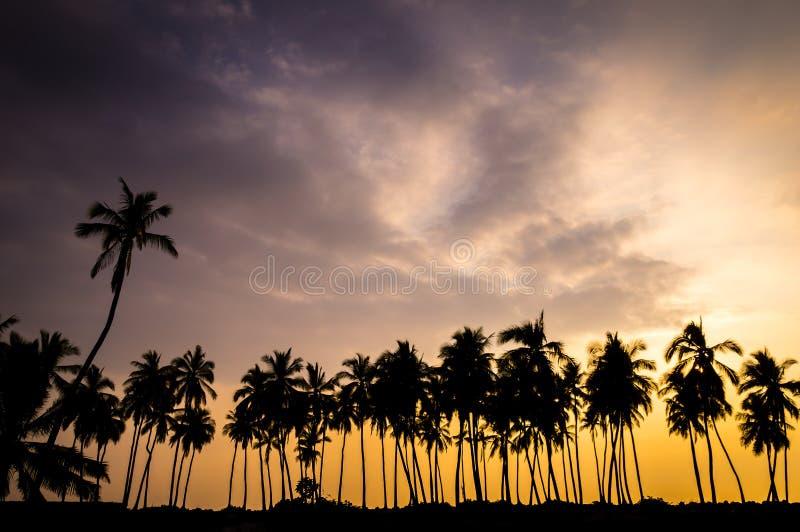 Le palmier silhouette au coucher du soleil en Hawaï photographie stock libre de droits