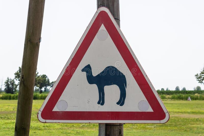 Le panneau routier de croisement de chameau avec le fond d'herbe verte, prennent garde du panneau routier de chameaux - image photos stock