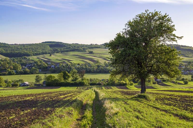 Le panorama large de beau ressort paisible du vert met en place le stretchi image libre de droits