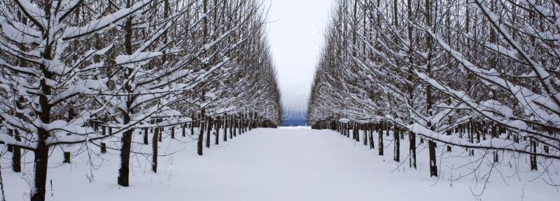 le panorama rame des arbres images libres de droits