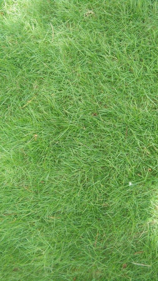 Le papier peint d'herbe pour des mobiles ceci est une herbe verte naturelle photos stock
