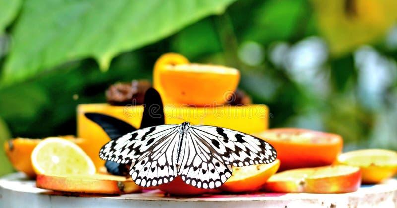 Le papillon se repose sur un plateau avec le fruit coupé en tranches de ‹d'†de ‹d'†photos libres de droits