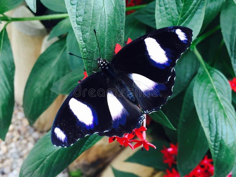Le papillon sont sur une feuille photographie stock libre de droits