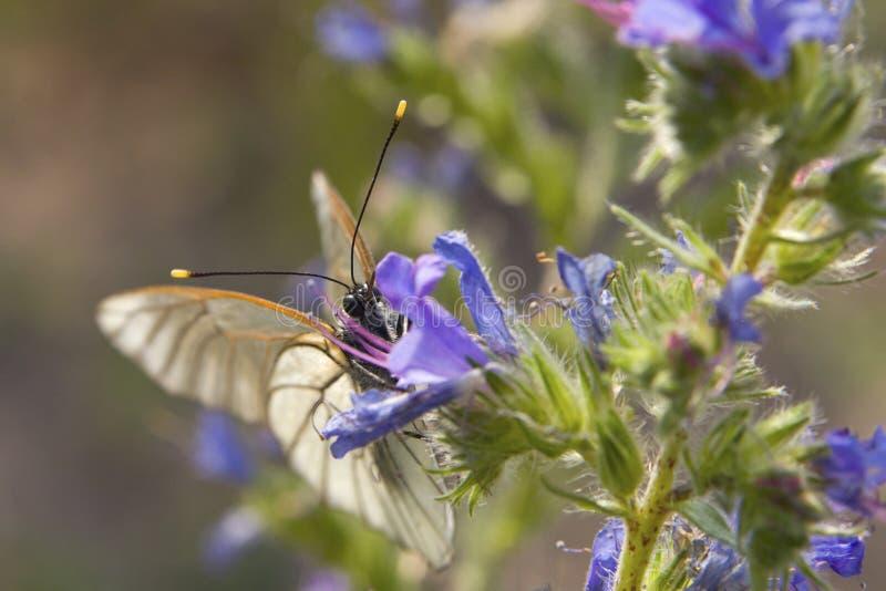 Le papillon sur une fleur avec la curiosité vous regarde images libres de droits