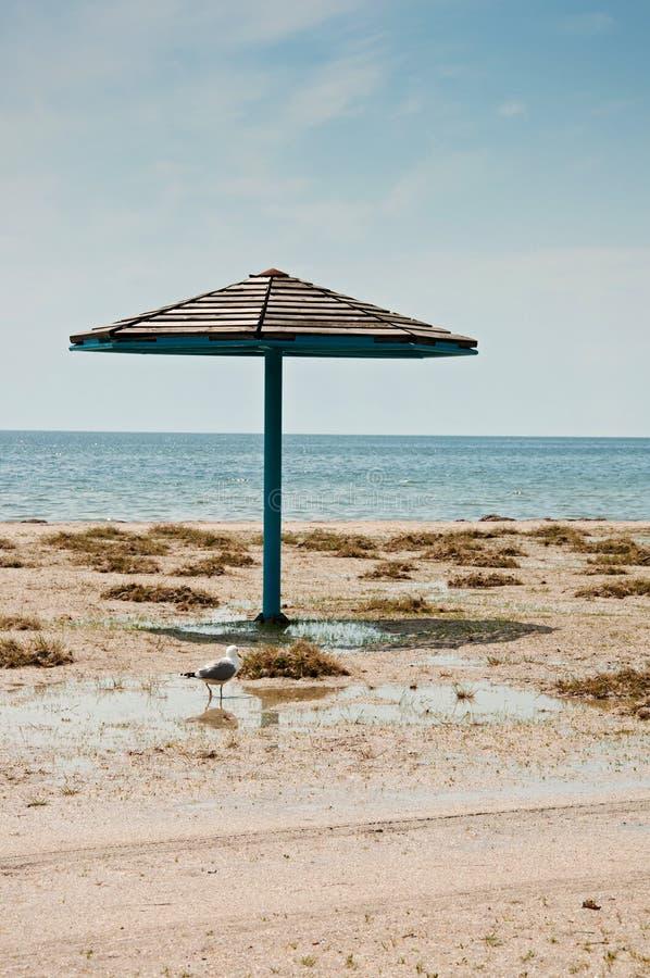 Le parasol et la mouette sur la plage sablonneuse vide photos stock