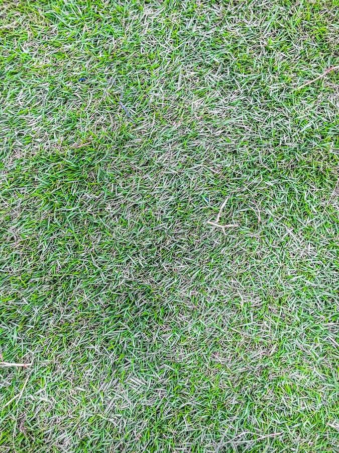 Le parc d'herbe verte photo libre de droits