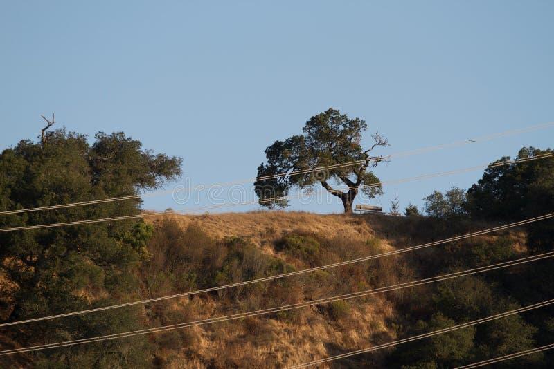 Le parc de Shiloh Ranch Regional The inclut les régions boisées de chêne, forêts des plantes vertes mélangées, arêtes avec des vu image stock