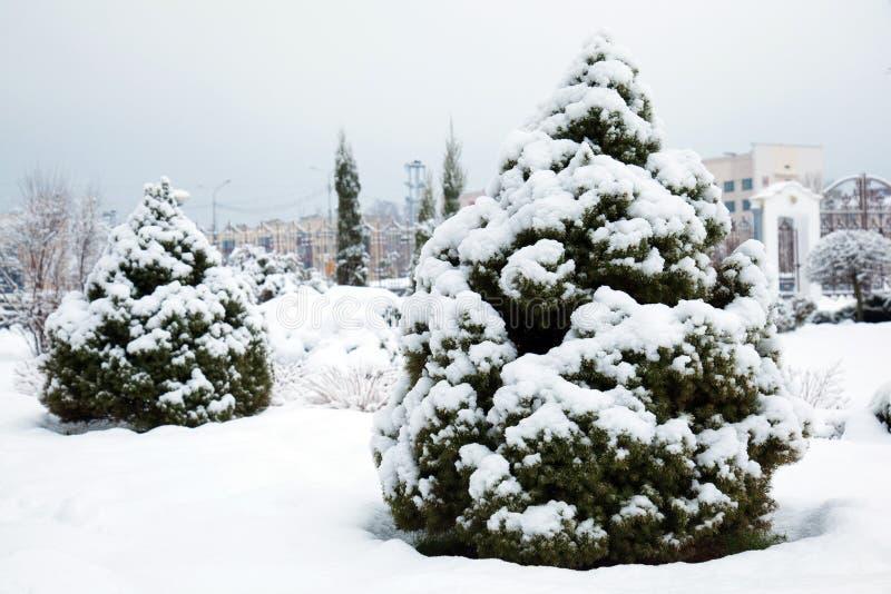Le parc de ville a couvert de neige fraîche images libres de droits