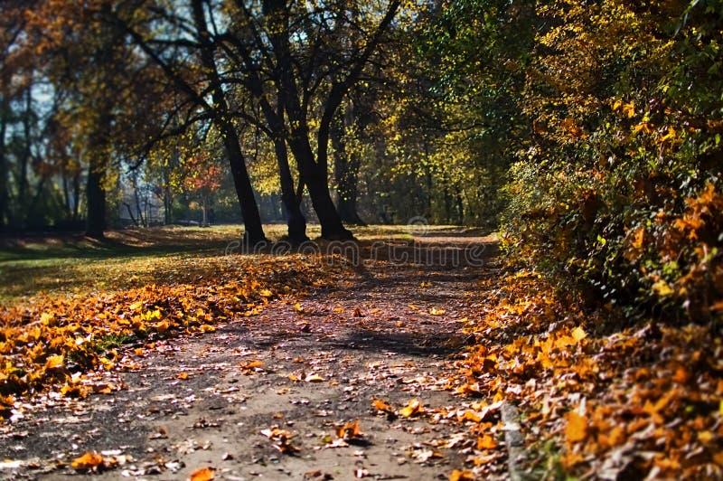 Le parc en automne photographie stock