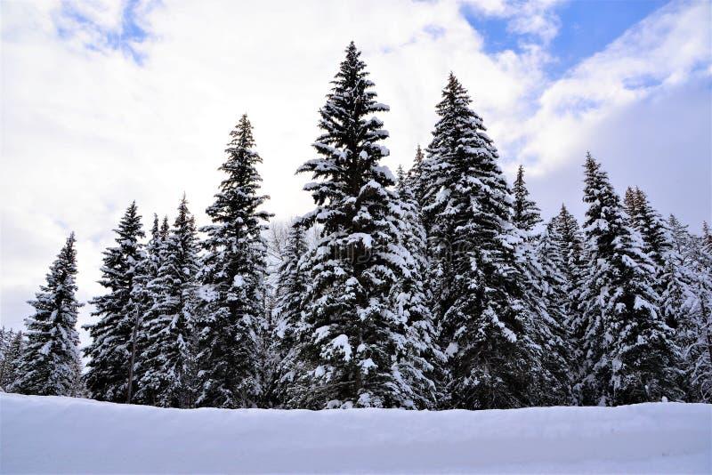 Le parc national grand de Teton est couvert dans la poudre blanche au printemps images stock