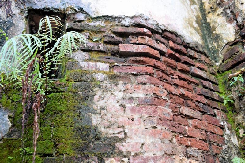 Le pareti di vecchia torre della fortezza spagnola filippine fotografie stock
