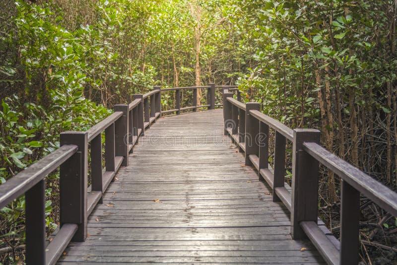 Le passage couvert au bois images stock
