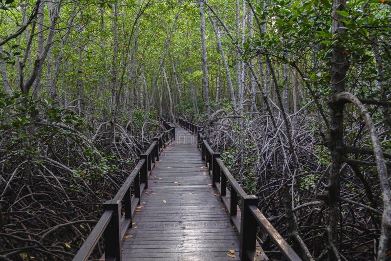 Le passage couvert au pont en bois dans la forêt photos libres de droits